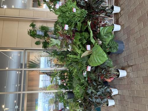 観葉植物セール品選全容