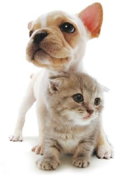 ペットの専門店コジマの画像